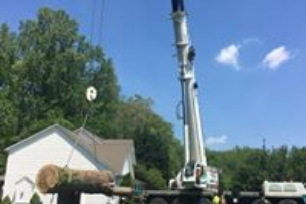 Crane removing tree from house