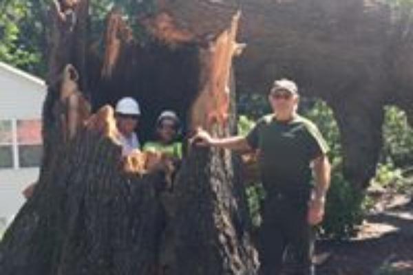Large Tree Removal Stafford Virginia