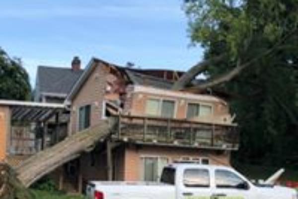 tree removal insurance claim