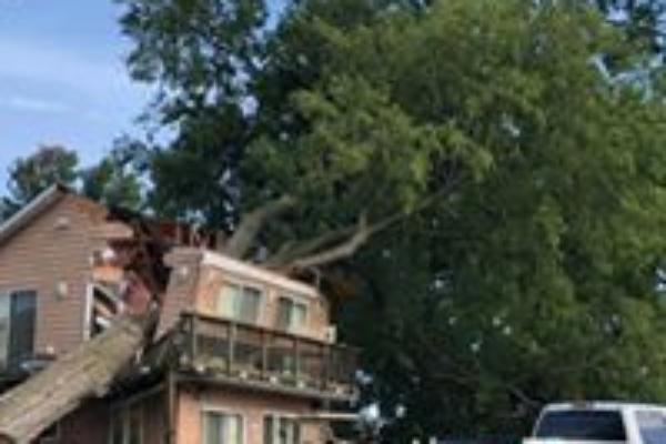 Fredericksburg Va tree and stump removal services